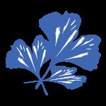 cropped-Ginko-Leaf-Blue.png